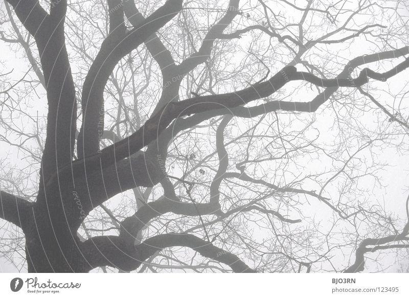 foggy woods #5 Natur Baum Winter Einsamkeit Wald dunkel kalt Traurigkeit Nebel nass Frost gruselig gefroren feucht Zweig