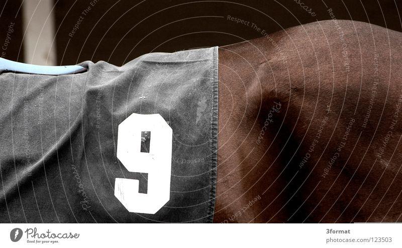 Renntag schön Tier Sport Kraft Arme Erfolg Rücken Geschwindigkeit nass Ziffern & Zahlen festhalten Pferd Müdigkeit Ackerbau Säugetier tierisch