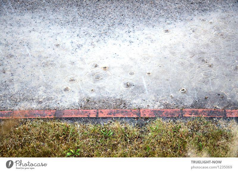Regen Umwelt Natur Urelemente Erde Sand Wasser Wassertropfen Sommer Wetter schlechtes Wetter Gras Garten Wege & Pfade Backstein kalt nass trist unten viele
