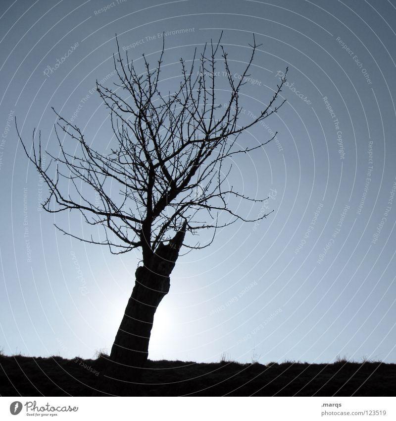 Kahlheinz Baum Pflanze kalt Horizont einzeln Gegenlicht schwarz Silhouette Vergänglichkeit Natur Ast Zweig Einsamkeit Single