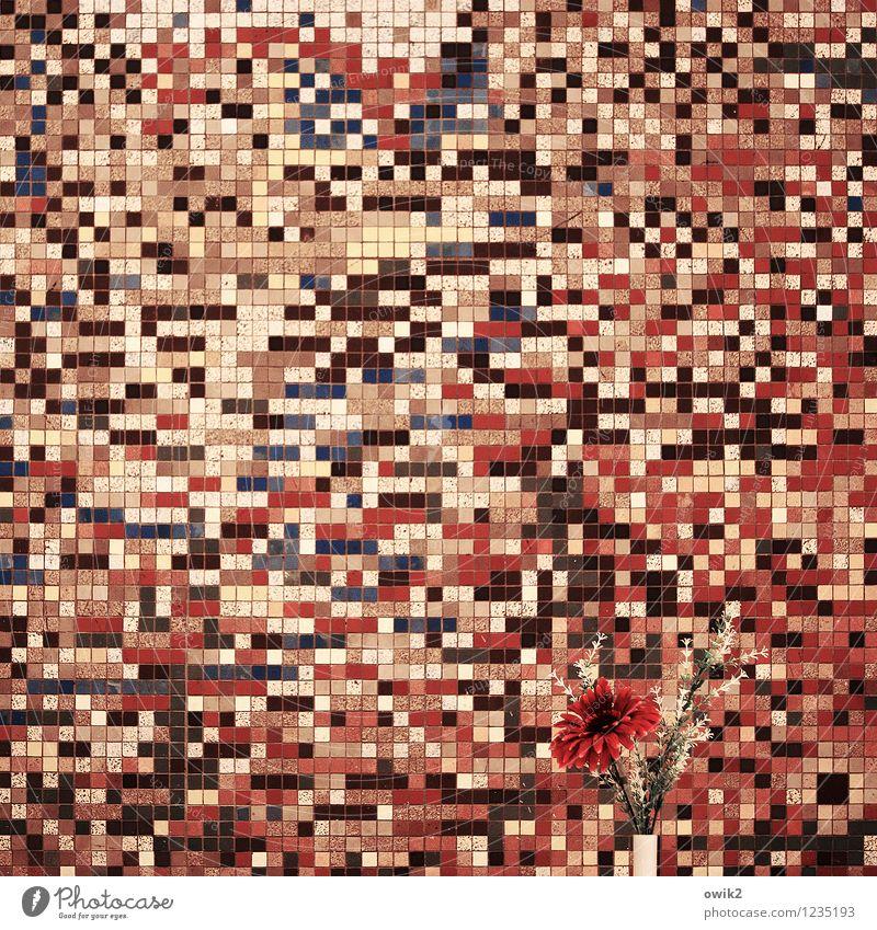 Blühende Landschaft Kunst Kunstwerk Mauer Wand Zusammensein retro viele verrückt wild rosa rot schwarz weiß Blumenvase Mosaik Design gemischt durcheinander
