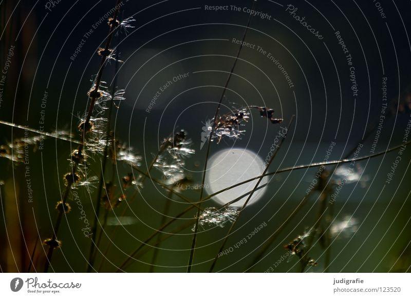 Am See, sonntags Natur schön Sonne Pflanze Farbe Gras See Küste glänzend Umwelt weich Punkt zart Stengel Schönes Wetter Teich