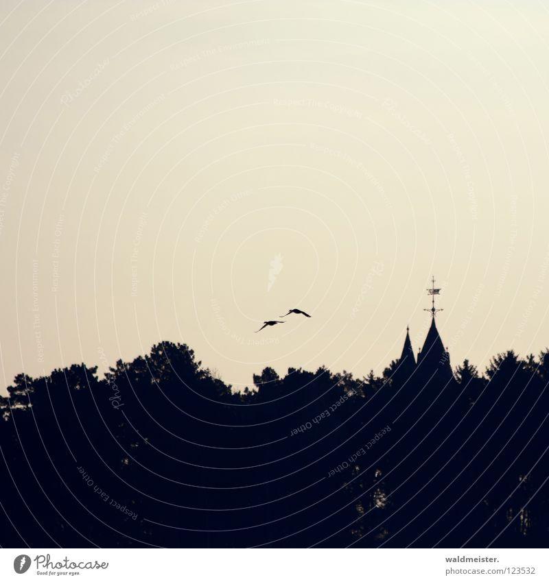 neulich in Waren Himmel Wald Vogel Dach Turm fantastisch Burg oder Schloss historisch Ente Märchen Mecklenburg-Vorpommern Turmspitze