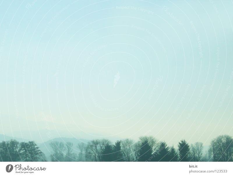 SKYLINE II Himmel Natur blau Ferien & Urlaub & Reisen Baum Einsamkeit Wolken Winter Wald Ferne kalt Berge u. Gebirge Schnee Holz Luft Linie