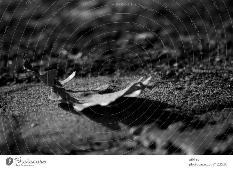Blatt, Eiche Herbst Winter Schwarzweißfoto Stein Wind Sehnsucht Traurigkeit Einsamkeit erloschen alt Eichenblatt Vergänglichkeit Wandel & Veränderung