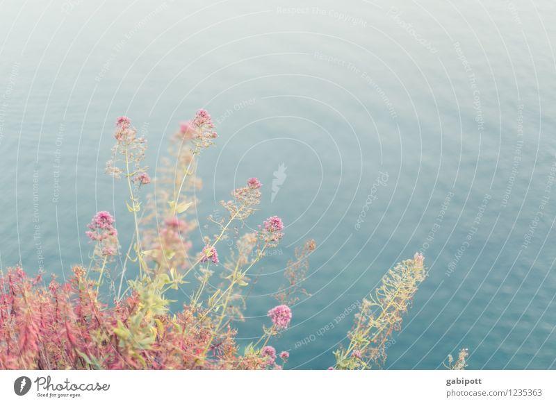 blumig Natur Ferien & Urlaub & Reisen Sommer Sonne Erholung Meer Blume Ferne Strand Umwelt Wärme Küste rosa Zufriedenheit Tourismus Sträucher