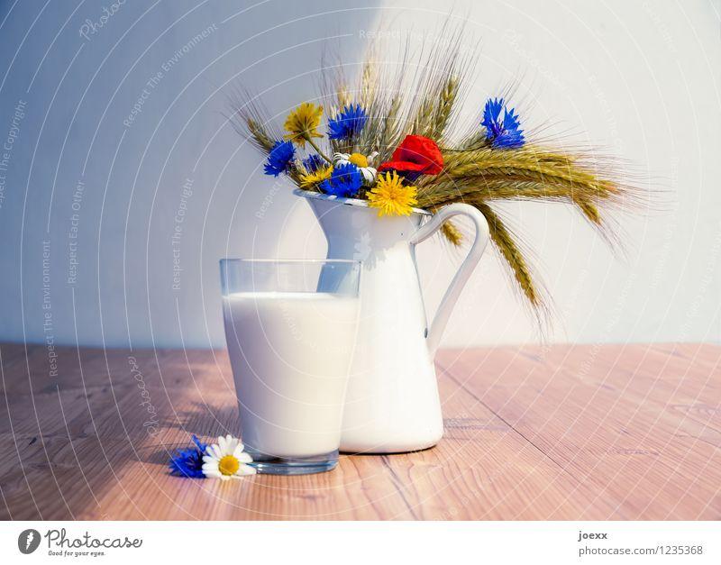 Müde Männer Milch Gesunde Ernährung Blume Holz schön einzigartig Gesundheit Nostalgie Milchglas Karaffen Getreide Stillleben Farbfoto mehrfarbig Menschenleer
