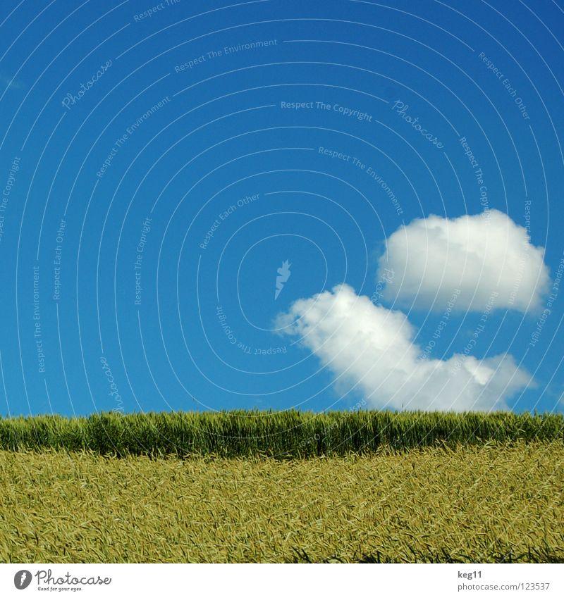 Irgendwann im Sommer ... Himmel Natur blau weiß Sommer Winter Wolken Wiese Horizont Deutschland Feld Pause Korn Bayern Fantasygeschichte Weizen