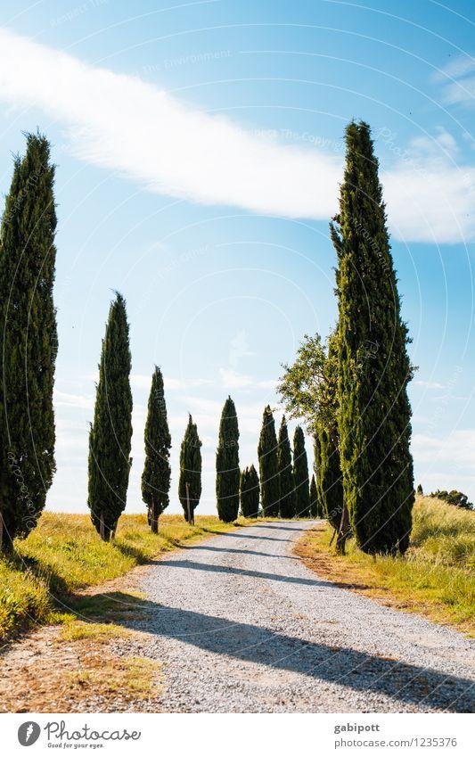 viva italia | azzurro heißt blau Natur Ferien & Urlaub & Reisen Pflanze Sommer Sonne Baum Erholung Landschaft ruhig Ferne Umwelt Leben Wiese Garten Park Wetter