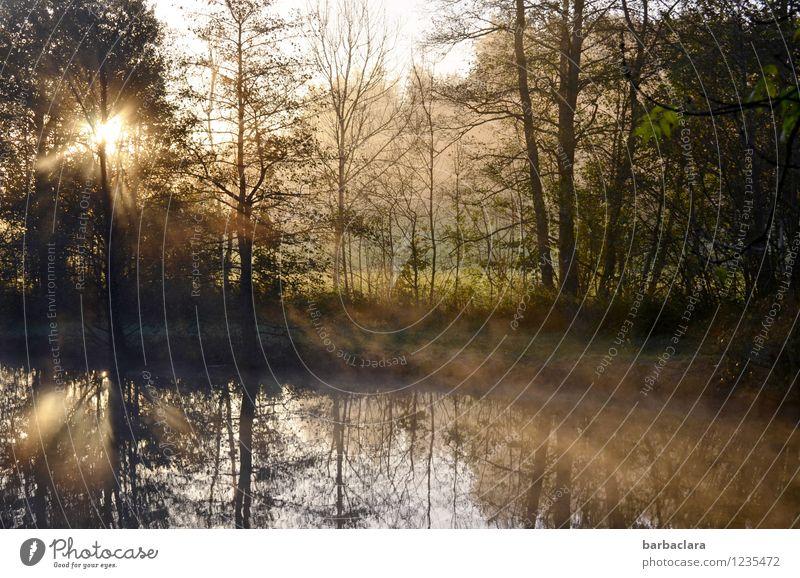 Geburtstagsglückwünsche für Tt Natur Landschaft Wasser Sonnenlicht Herbst Klima Schönes Wetter Nebel Wald Seeufer Teich leuchten Stimmung Vorfreude ruhig Beginn