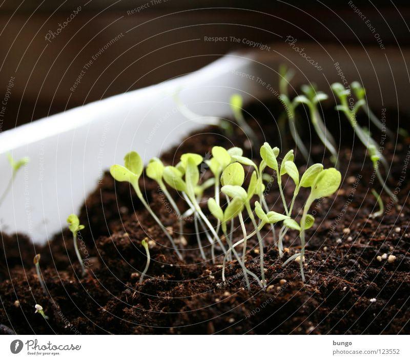 Photosynthese Natur grün Pflanze Blatt Leben Kraft Erde Wachstum Stengel Gemüse Botanik Samen erleuchten Biologie ziehen Aussaat