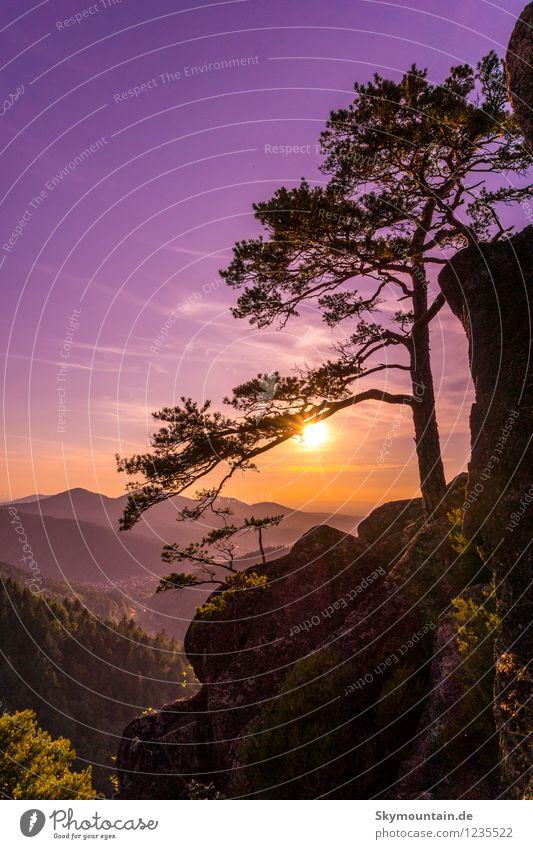 Sunset at Lautenfelsen Natur Ferien & Urlaub & Reisen Pflanze Sommer Baum Erholung Landschaft Tier Ferne Umwelt Berge u. Gebirge Freiheit Lifestyle Felsen