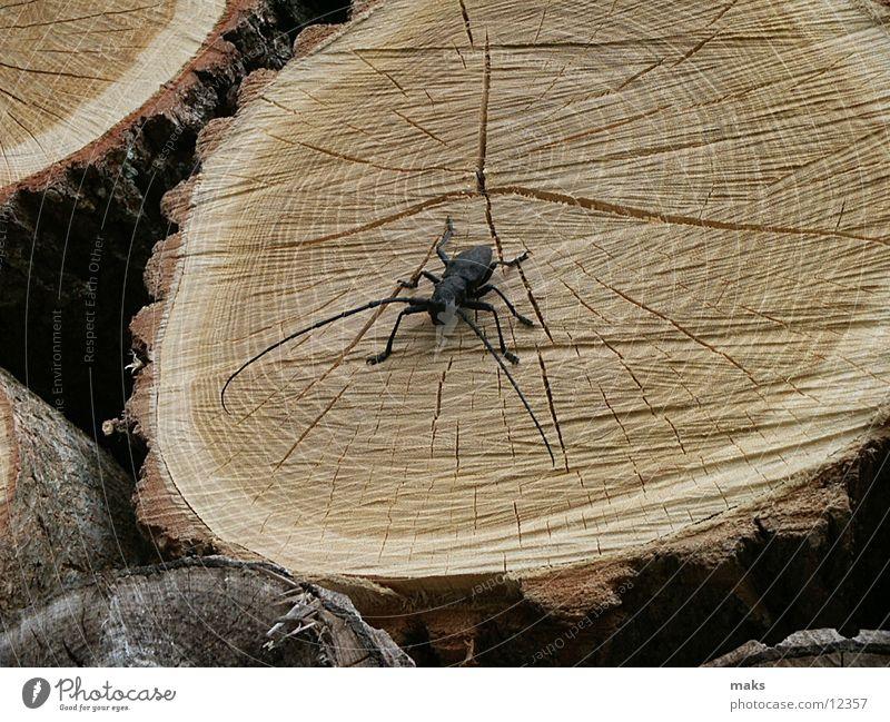 flotter käfer Holz Insekt Käfer Baumstamm Baumrinde Baum