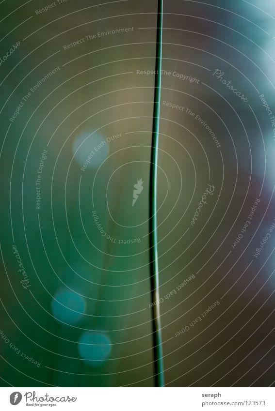Binse Natur Pflanze Umwelt Küste Gras Blüte Hintergrundbild Seeufer Kräuter & Gewürze Stengel Flussufer Schilfrohr Umweltschutz Halm Röhricht Biotop