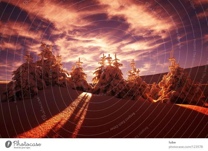 Wintertraum Schnee Weihnachtsbaum Tanne Schneelandschaft Weihnachtsdekoration Lichtstrahl Sonnenaufgang Pulverschnee