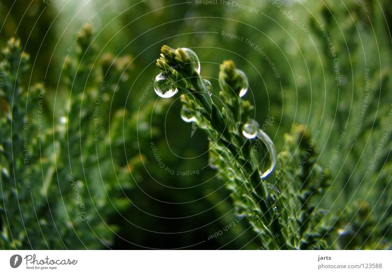 Tropfen nass Baum Sträucher Hecke grün Herbst Wasser Wassertropfen Regen jarts Natur