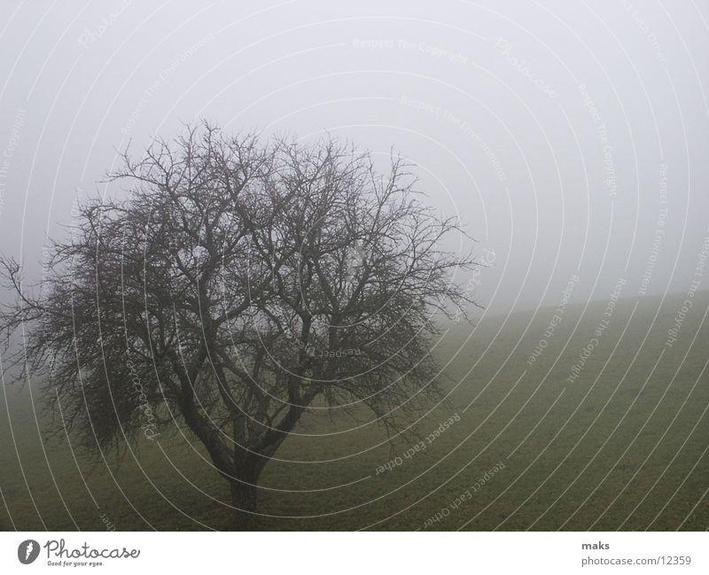 november Herbst November Nebel trist grau Wiese Baum Berge u. Gebirge