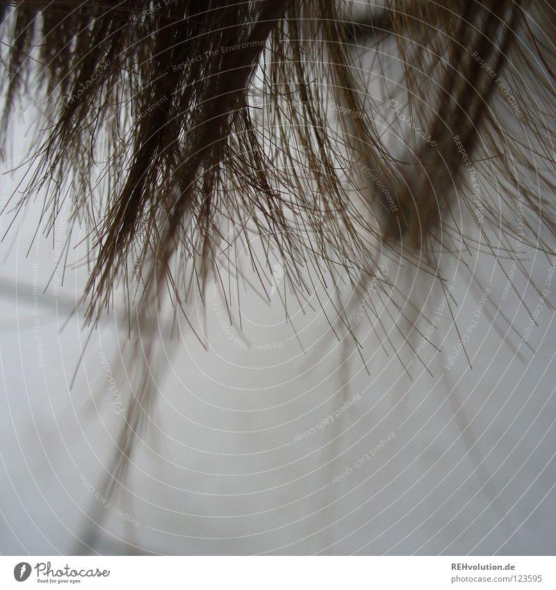endlich wieder HAARE :-) krause Haare zerzaust kalt Haare & Frisuren Wellen braun langhaarig gewaschen nass feucht Friseur Schwimmbad Haarschnitt Bad Haarschopf