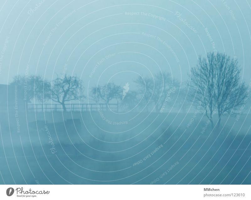Mittendrin statt nur dabei Himmel blau weiß Baum Winter dunkel kalt Wetter Nebel trist Sträucher verstecken Tau mystisch schlechtes Wetter