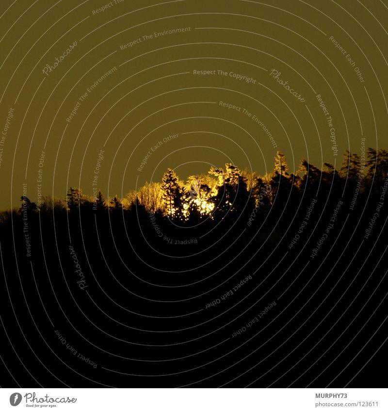 Der Wald brennt oder Die ersten Sonnenstrahlen am Morgen Himmel weiß Baum schwarz gelb dunkel hell Treppe Hügel Himmelskörper & Weltall