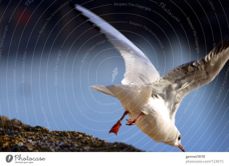 Up, Up and away ... Möwe Geschwindigkeit springen ungewiss Ecke Mauer tauchen gehen Vogel gefährlich Angst Panik Flucht Fliegen Flügel Feder Fluss Wege & Pfade