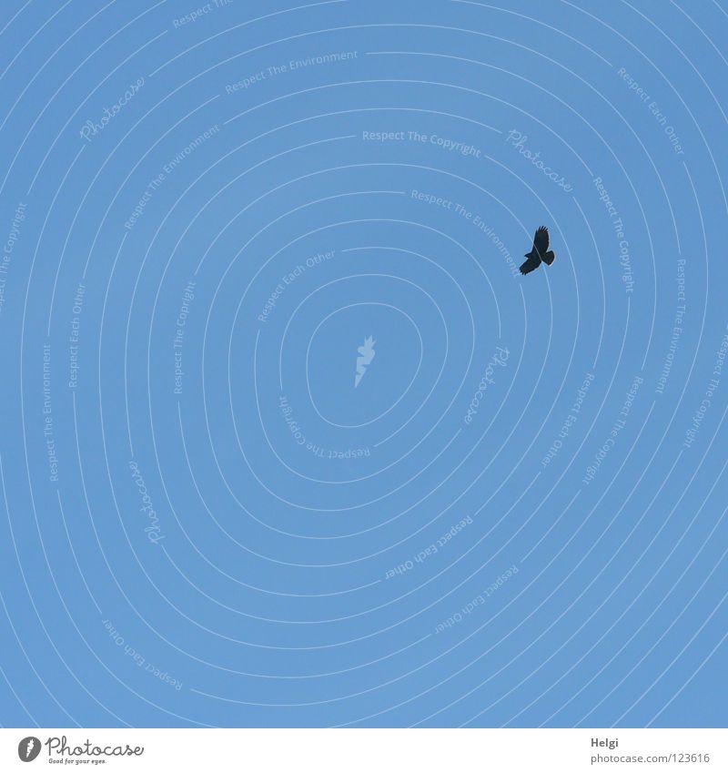 ich hab ´nen Vogel... Himmel Ferne Lebensmittel fliegen hoch Luftverkehr Suche gefährlich Flügel Feder Jagd Schnabel Dieb Futter ausgestreckt