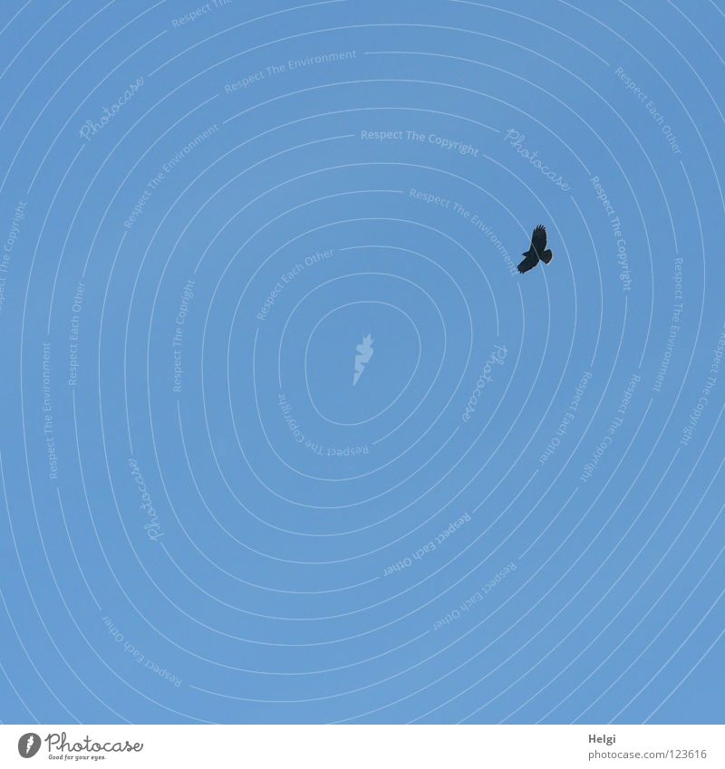 ich hab ´nen Vogel... Himmel Ferne Lebensmittel Vogel fliegen hoch Luftverkehr Suche gefährlich Flügel Feder Jagd Schnabel Dieb Futter ausgestreckt