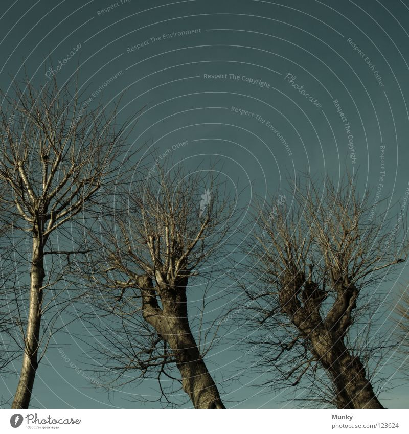 Dunkle Gestalten blau grün Baum dunkel springen Wetter Angst leer Ast gruselig Unwetter Zweig Gewitter Panik geschnitten Charakter