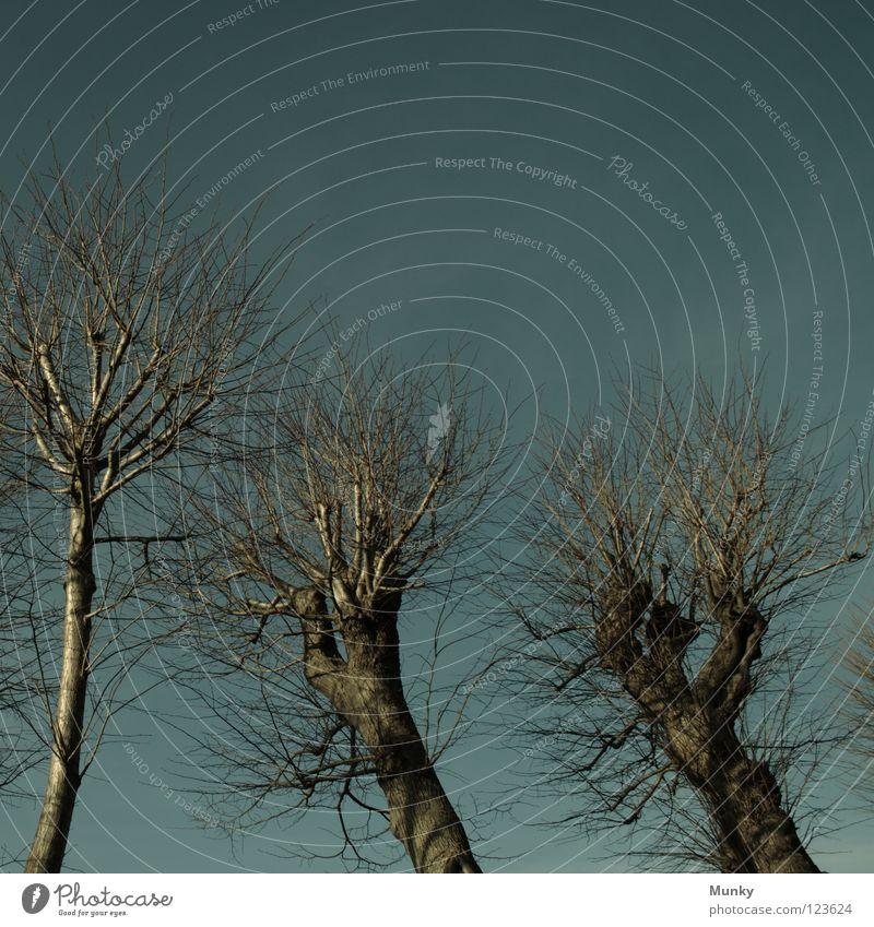 Dunkle Gestalten dunkel Mittag grün Baum Unwetter verkrüppelt geschnitten stur gruselig Schrecken springen Donnern Schlag Angst Panik Gewitter frünstich blau