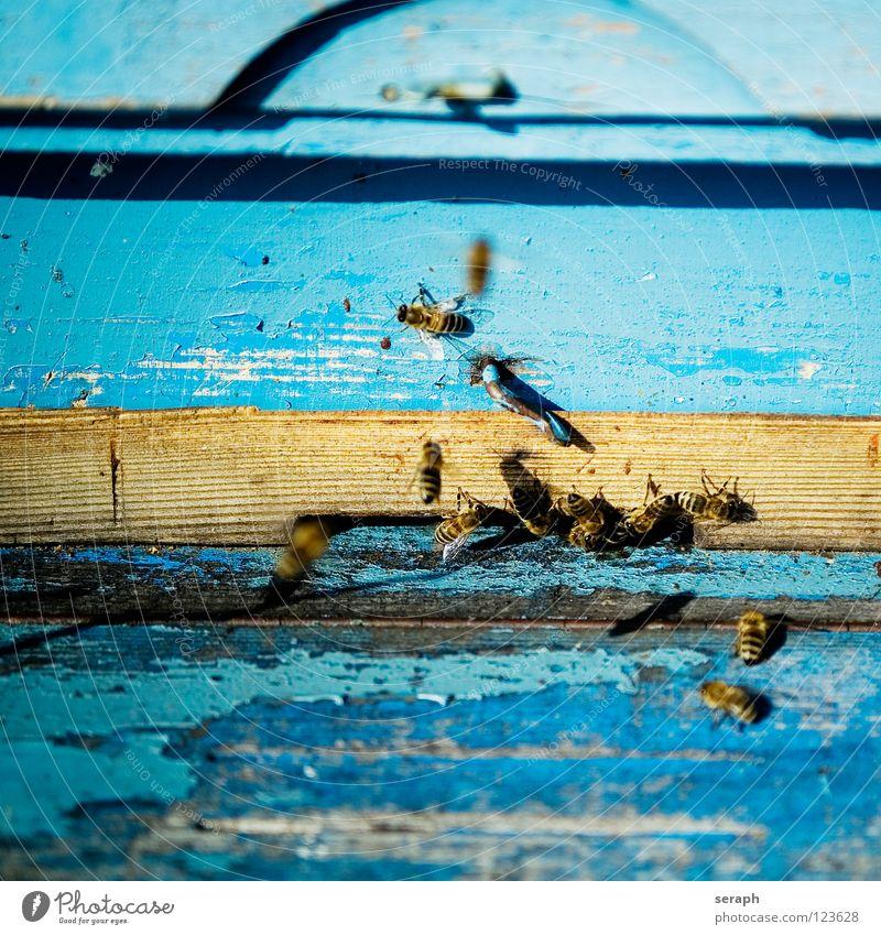 Bienenstock Tier Holz Beine fliegen wild Wildtier Insekt Biene Holzbrett fliegend König ansammeln fleißig Honig Bienenwaben emsig