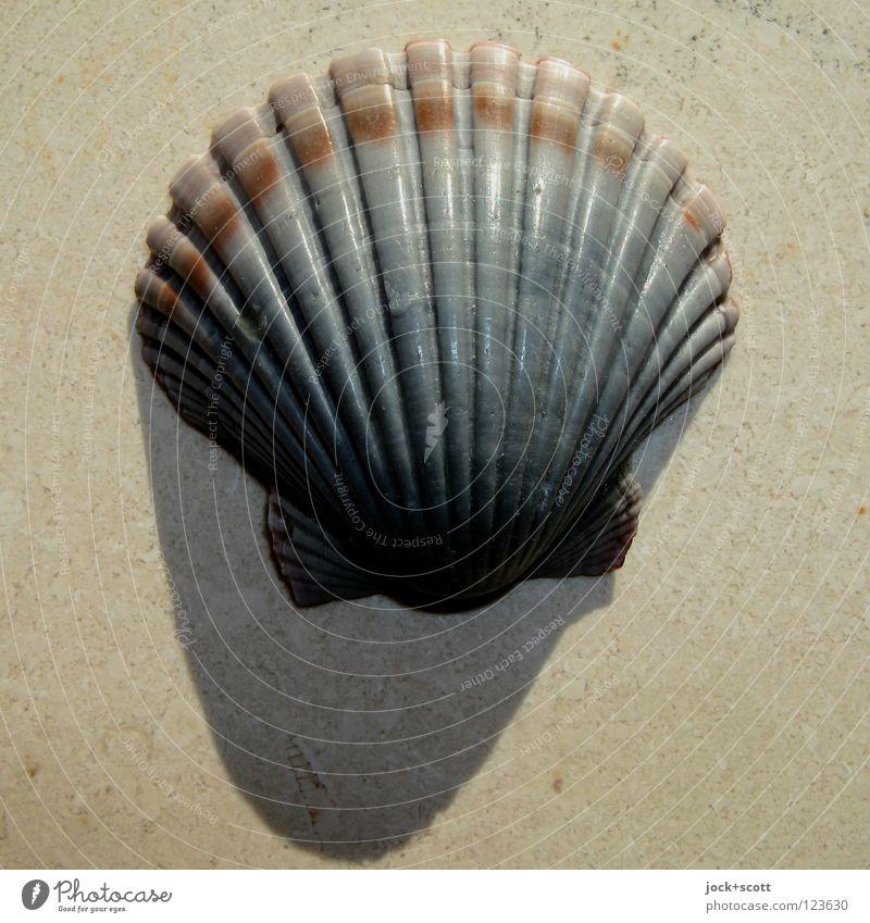 Muschel Schale exotisch 1 Tier Souvenir Sammlerstück Kristalle liegen rund Wärme Stimmung Schutz Kalkstein Erinnerung Kristallstrukturen gekrümmt