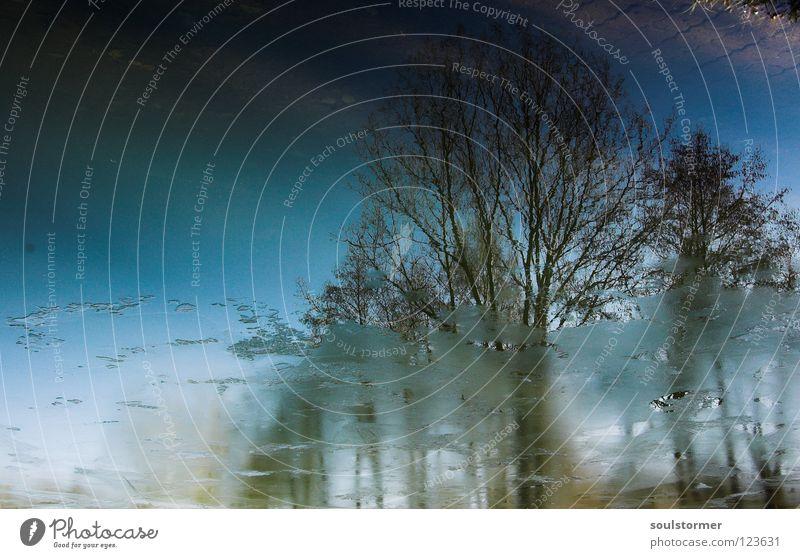 Baumgruppenportrait Wasser Himmel blau Winter kalt Frühling See Eis braun nass Ast Spiegel Ekel Wäldchen