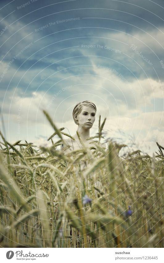 sie schaute .. himmel Wolken Feld Weizen Ähren Sommer Gesicht Kopf Schaufensterpuppe geheimnisvoll