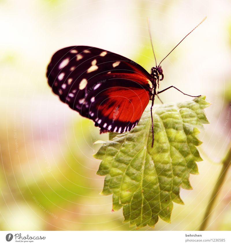 bewegungslos Natur Pflanze Tier Frühling Sommer Schönes Wetter Baum Sträucher Blatt Garten Park Wiese Wildtier Schmetterling Tiergesicht Flügel 1 beobachten