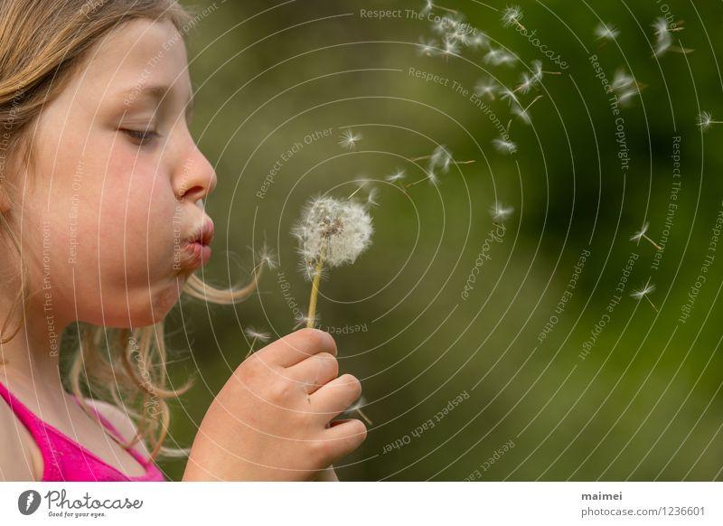 Die Pusteblume Freude schön Haare & Frisuren Spielen Kinderspiel Sommer Mädchen Kindheit 1 Mensch 3-8 Jahre Natur Frühling Blume blond langhaarig gebrauchen