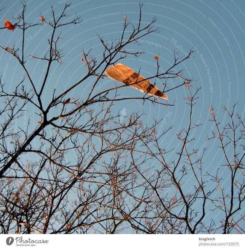 Blatt Himmel Baum blau Zeitung Information Ast Medien Zeitschrift Zweig Printmedien