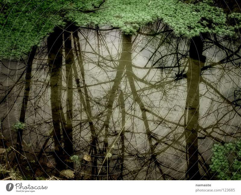 traumprinzenteich Wasser Baum verfaulen Teich Märchen Erzählung Fantasygeschichte Kröte Traumprinz Wasserpflanze