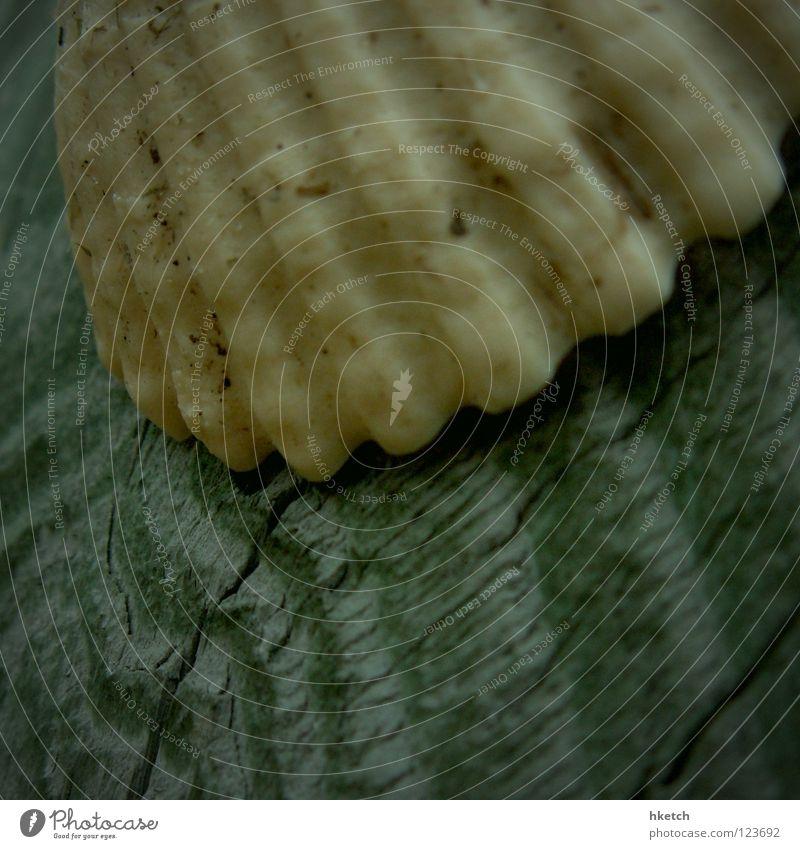 Treibgut Wasser Meer Strand Holz Wasserfahrzeug Küste Vergänglichkeit Statue Schifffahrt Holzbrett Muschel Pirat Schiffsplanken gestrandet Strandgut Schiffsunglück
