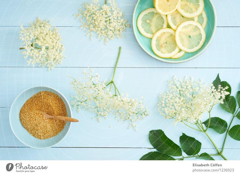 Zutaten für Holunderblütensirup blau Pflanze grün Sommer gelb Blüte Gesundheit Foodfotografie Lebensmittel frisch Getränk Bioprodukte Schalen & Schüsseln Teller Zucker Zitrone