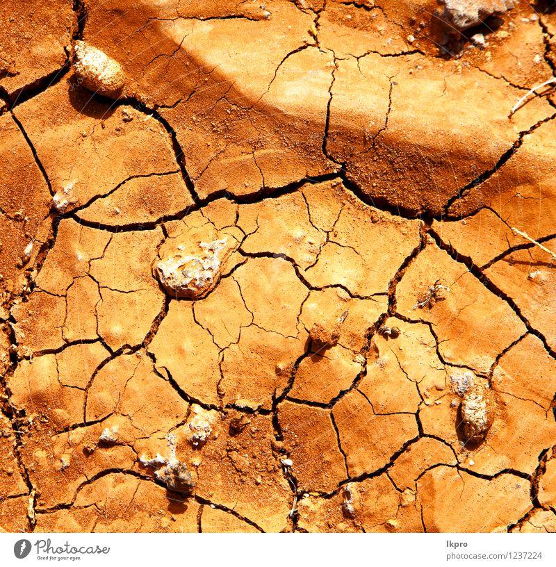 Zweig Holz Lanzarote Spanien Zusammenfassung Natur Ferien & Urlaub & Reisen Farbe Sommer weiß Strand gelb Küste grau Stein braun Sand Felsen Tourismus dreckig