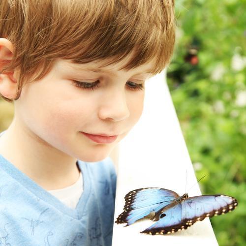 die wunder dieser welt! Kind Junge Familie & Verwandtschaft Kindheit Haut Haare & Frisuren Gesicht Auge Ohr Nase Mund Lippen 1 Mensch 3-8 Jahre Garten Park