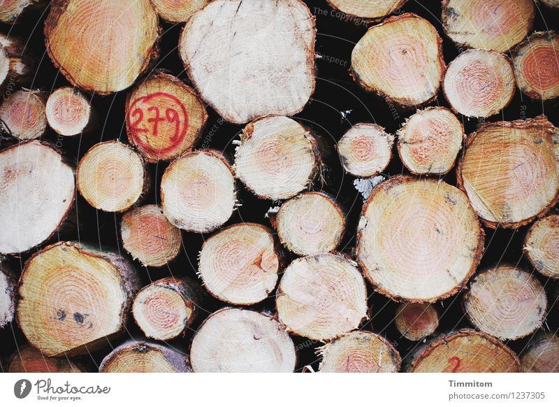 Schnittstellen. Wald Baumstamm Baumrinde Jahresringe Ziffern & Zahlen Holzstapel liegen natürlich Sauberkeit braun rot schwarz Gefühle Farbfoto Außenaufnahme