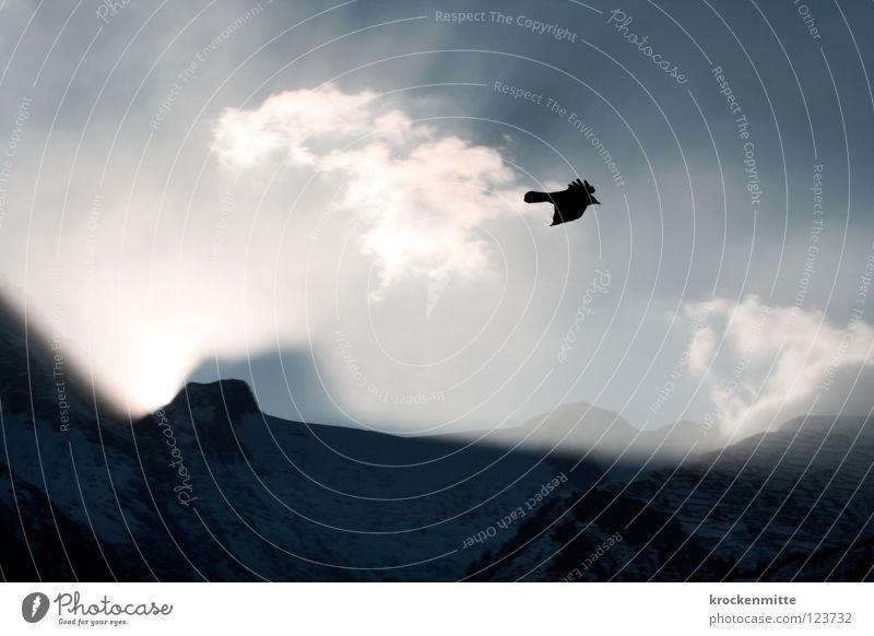 early bird Vogel Bergkette Sonnenaufgang Wolken Sonnenstrahlen Gegenlicht alpin Schweiz Flügel Morgen Sonnenlicht Tier Berge u. Gebirge Beleuchtung fliegen frei