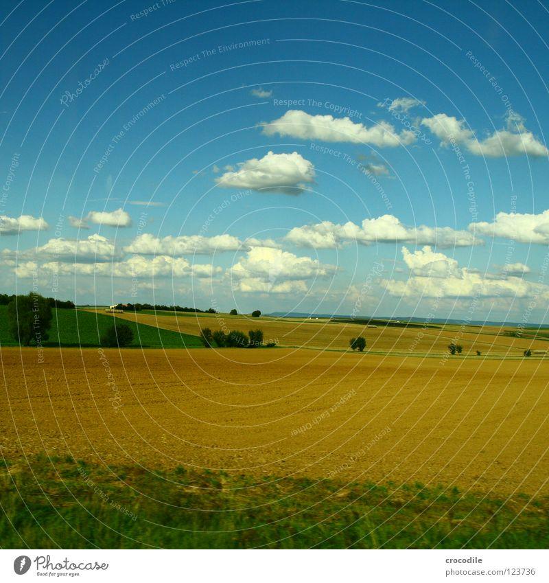 schäfchenwolken über der mitte deutschlands II Feld Landwirtschaft Wiese Sommer Wolken Baum Sträucher Kulturlandschaft Produktion Blauer Himmel Ackerbau