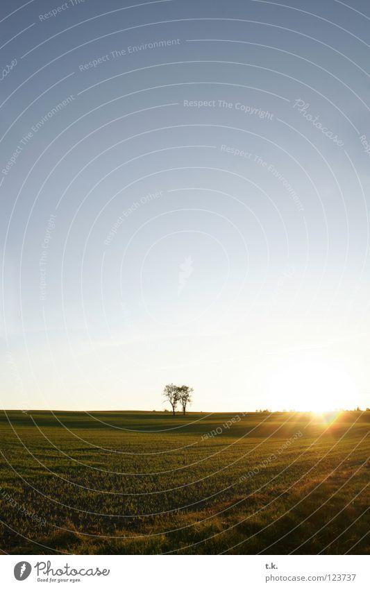 Aus dem Leben eines Baumes I Feld Sonnenuntergang Gegenlicht Wiese Herbst Natur Himmel Landschaft