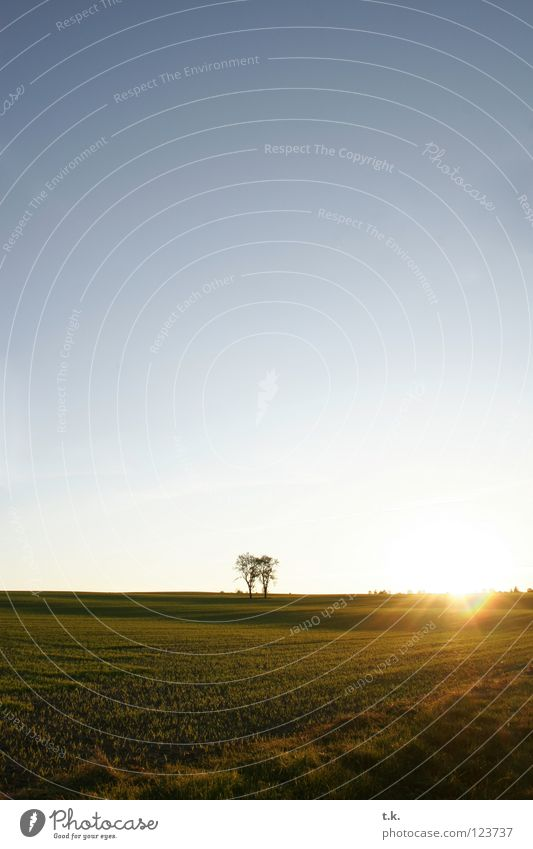 Aus dem Leben eines Baumes I Natur Himmel Herbst Wiese Landschaft Feld