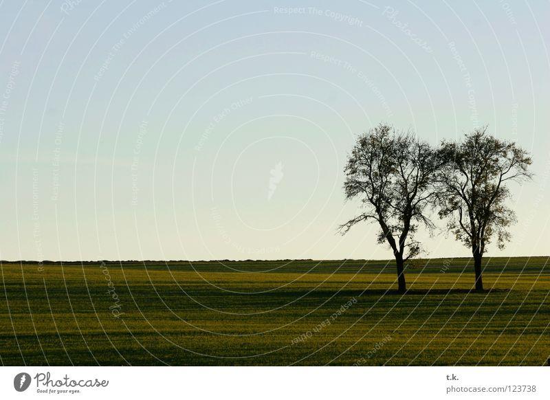 Aus dem Leben eines Baumes II Feld Sonnenuntergang Wiese Herbst Natur Himmel Landschaft