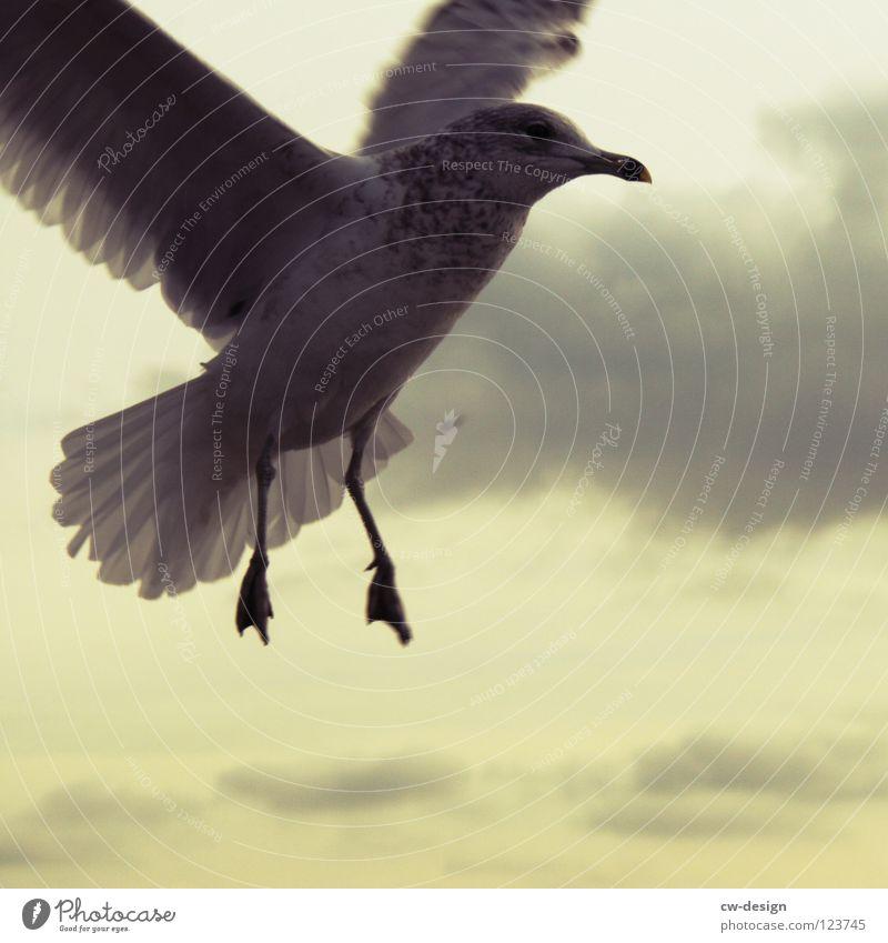 vogelfrei I Himmel blau schön Wolken Tier schwarz dunkel Bewegung grau klein hell Hintergrundbild 2 Luft Vogel fliegen