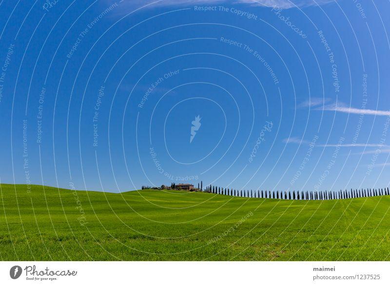 Ein Landgut mit einer Zypressenallee im Frühling Ferien & Urlaub & Reisen Haus Landschaft Wolkenloser Himmel Sonnenlicht Baum Gras Wiese Feld Hügel ästhetisch