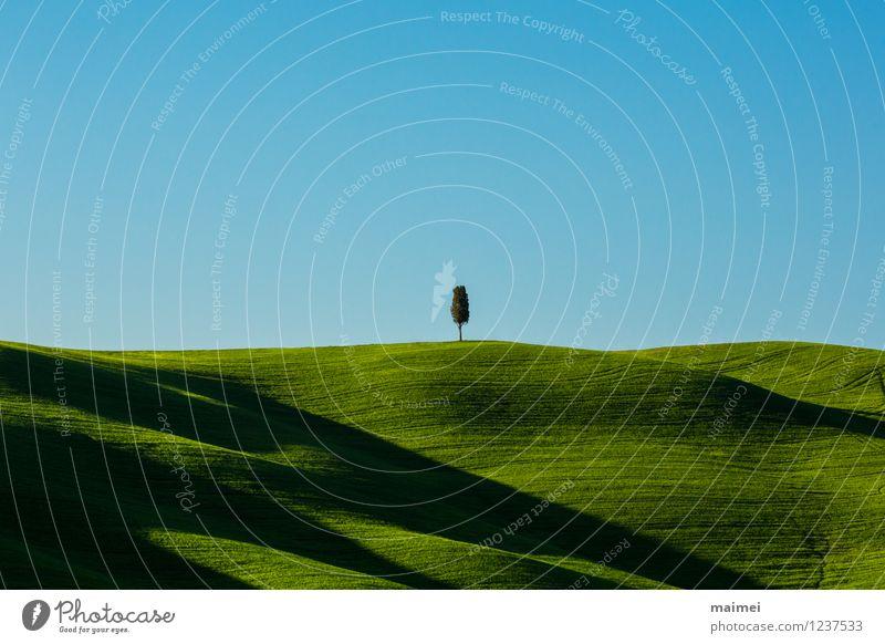 Eine einsamer Baum in grünen Toskanawiesen Ferien & Urlaub & Reisen blau Sonne Einsamkeit Landschaft ruhig Wolken Frühling Wiese Gras Freiheit Linie Horizont